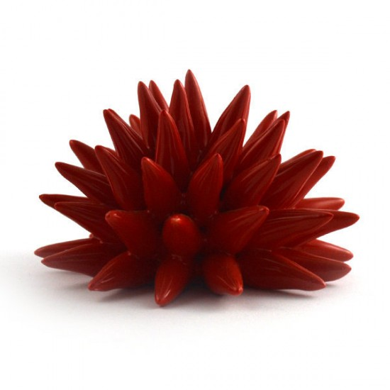 Red passion urchin Ø14cm